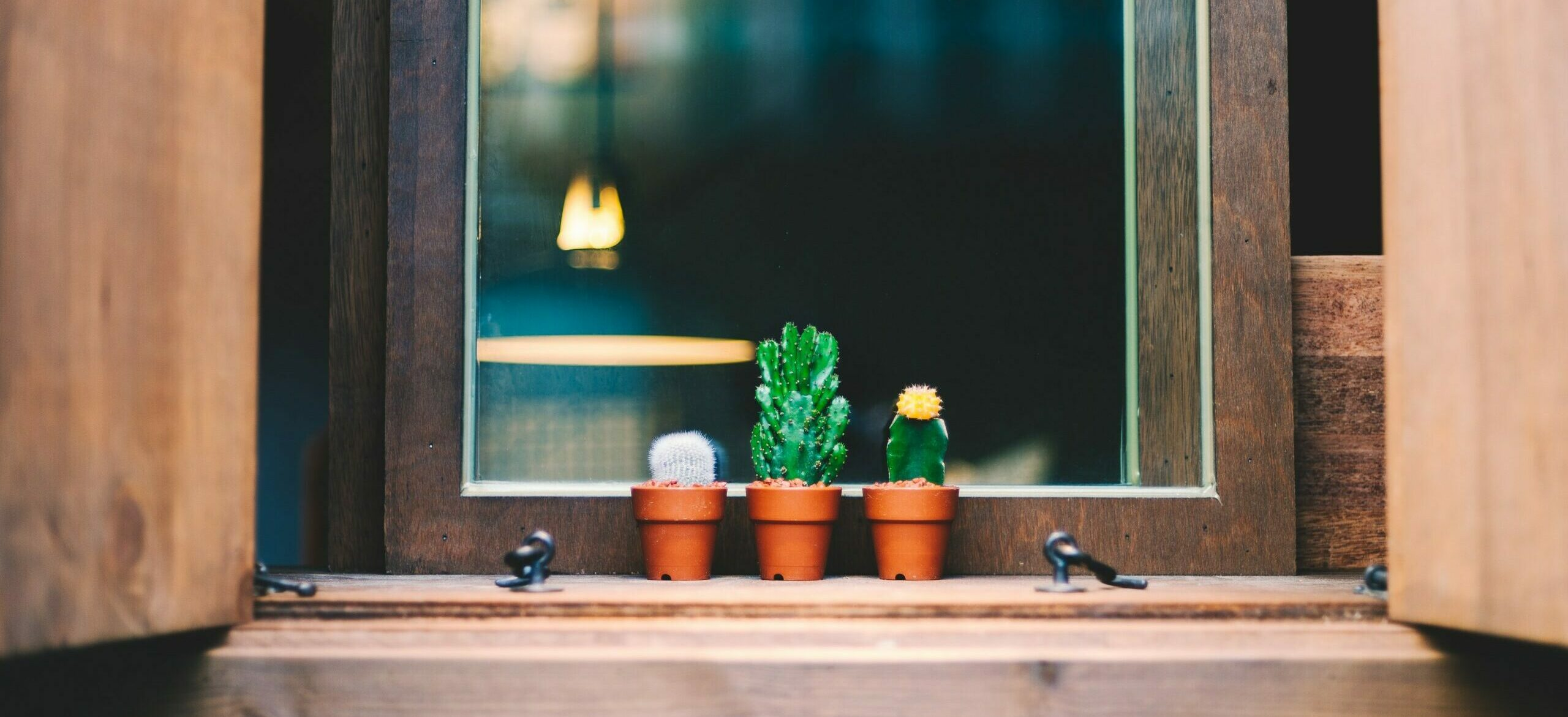 three small succulents sitting in a window